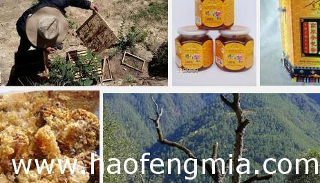 国家地理标志保护产品维西百花蜜:迪庆维西百花蜜