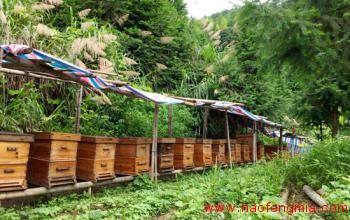 三河村中蜂养殖效益好  生态蜂蜜