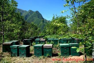 秦岭养蜂人
