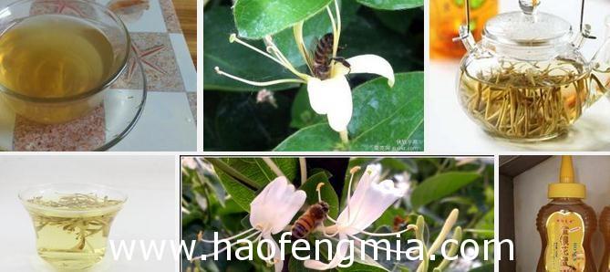 金银花有蜜吗