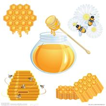 中国政府对蜜蜂产业十分重视
