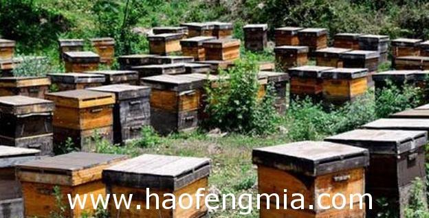 夏天养蜂注意事项介绍