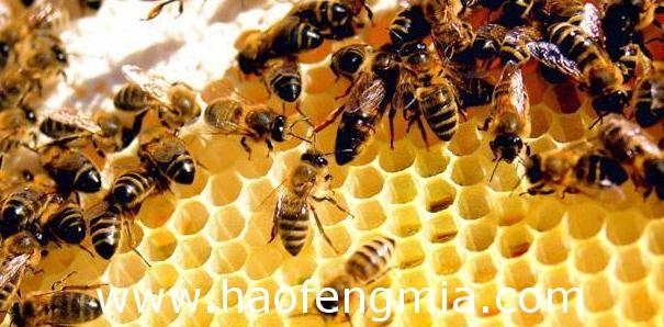蜂群管理的误区介绍