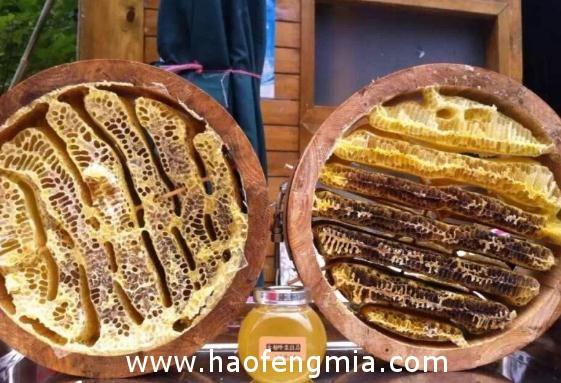 青川唐家河养蜂业作为精准扶贫特色产业来抓