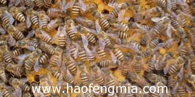 有什么办法让蜜蜂繁殖的更快?