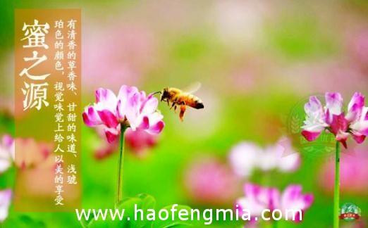 江苏蜂蜜抽检:蜂蜜检出氯霉素残留