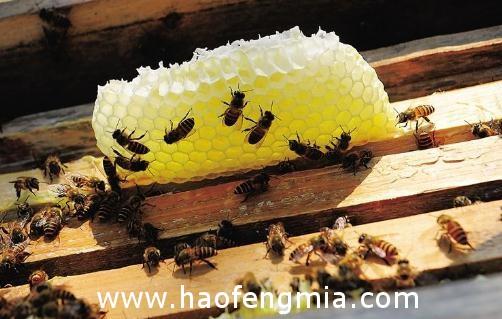 温州民工偷蜂蜜解馋被抓