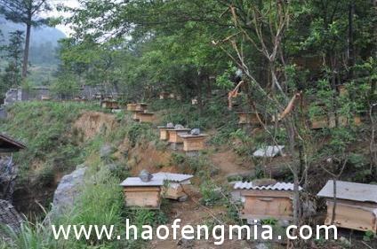 蜂友分享养蜂暖冬控飞认知