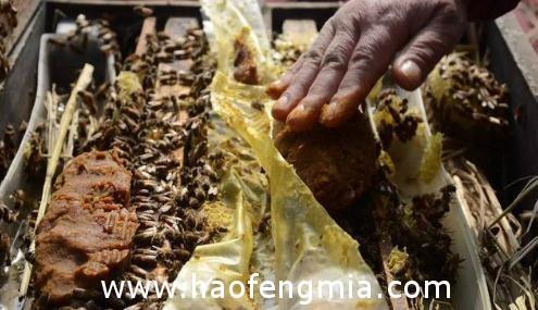 养蜂人为什么要给蜜蜂喂白糖?