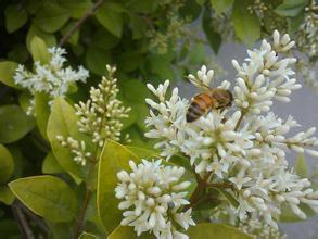 蜂蜜食品生产许可获证企业之陕西今正蜂业有限公司