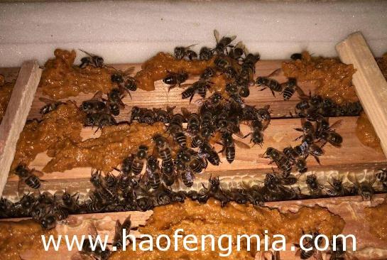 新疆地区蜜蜂春繁的注意点