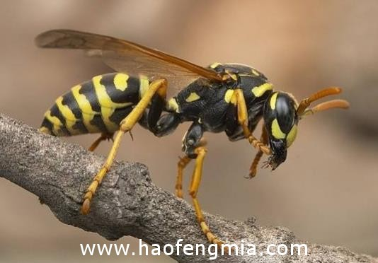 养蜂不是为卖蜂蜜,挣得竟然比蜂蜜多得多