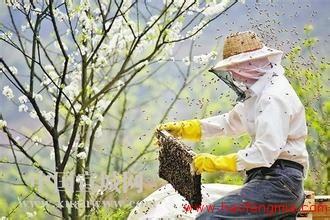 蜂蜜创业:高楠蜂蜜喜获大丰收 贫困脱贫增收