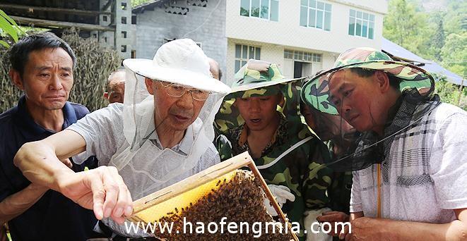鹤峰县蜜蜂爷爷助3万农民养殖中蜂脱贫致富