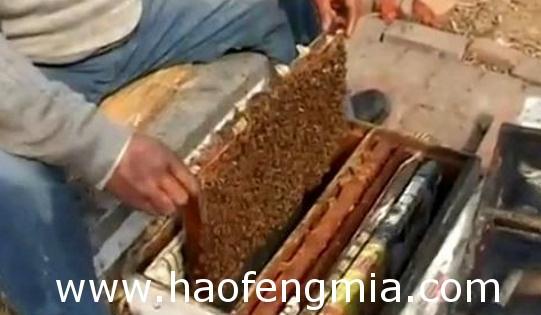 中蜂活框饲养失败原因介绍