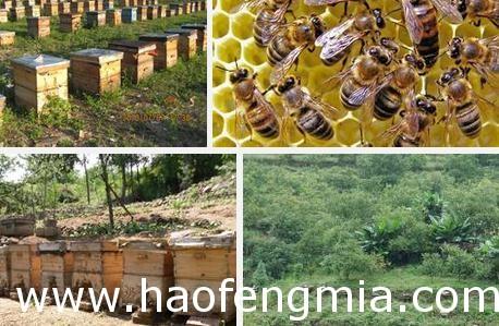 <a href=http://www.360fmw.com/mfyz/ target=_blank class=infotextkey>蜜蜂养殖</a>
