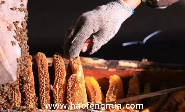 南江蜂蜜:古老取蜂蜜的流程