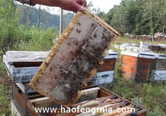 圆形巢蜜继箱和构造和作用