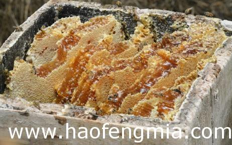 河南蜜之缘高品质蜂蜜与央视网商城达成初步合作意向