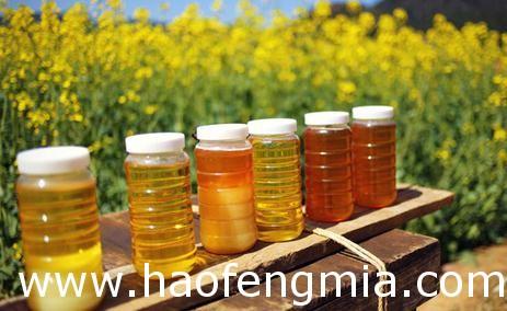 蜂蜜创业:黑蜂蜂蜜皇后批发故事