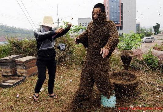 蜂蜜创业:养蜂人王军成带富一方乡亲