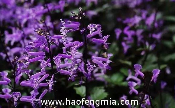 云南主要蜜源植物:四级主要蜜源植物介绍