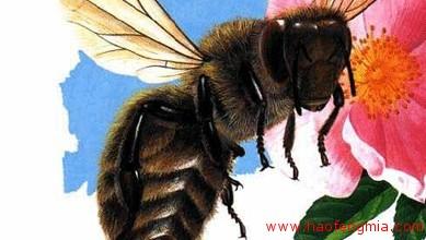 亚洲还是非洲?蜜蜂的起源地之争