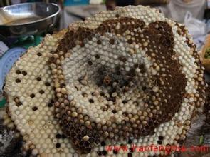 关于防范食用野生蜂蜜蜂蛹中毒的预警公告