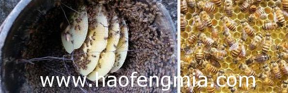 石柱沙子镇蜂蜜效益好