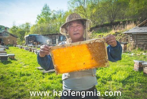 北碚区农技协联合会助力销售滞销蜂蜜产品