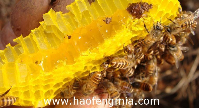 韶关多位市民误食野生蜂蜜中毒
