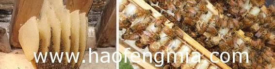 蜜蜂窝王台太多怎么办