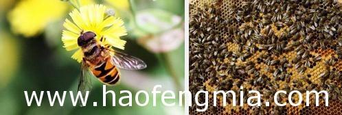 上海养蜂业之蜂产品加工与经营介绍