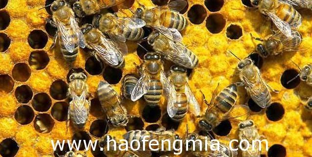 蜜蜂基础知识介绍
