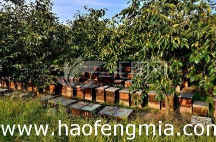 农大蜂场蜂蜜有防腐剂