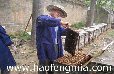 村官成立养蜂专业合作社  帮农民脱贫