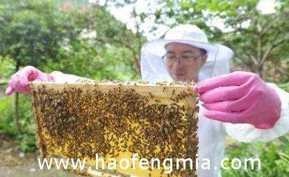 为什么很多养蜂人并不愿意将自己的蜂蜜卖给熟人?