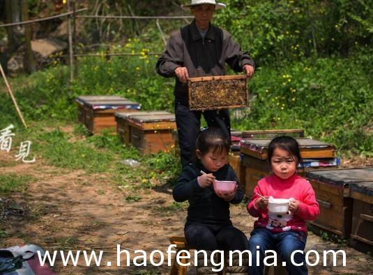 黄莲乡大力发展蜂蜜产业   助贫困户脱贫