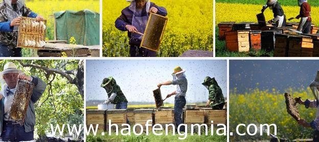 """蜂蜜创业:阆中""""土蜂王""""四代养蜂人"""