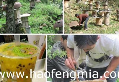 竹溪蜂蜜国家级展览会供不应求