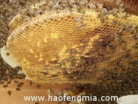 关于蜂蜜的八大常识真相揭秘