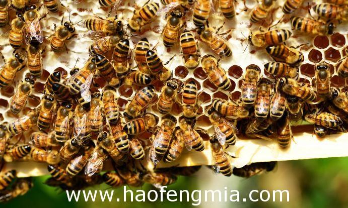 中国蜂产品的原始采集和有关蜜蜂的早期文字记载