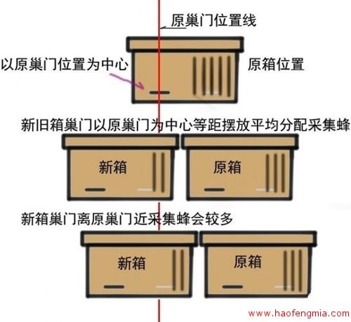 人工分蜂方法介绍