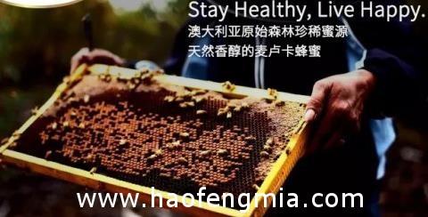 为什么澳洲人都爱吃Blossom Health麦卢卡蜂蜜