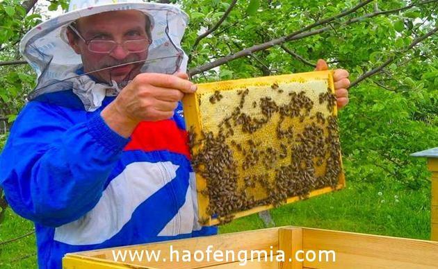 俄罗斯蜂蜜品牌将亮相2017(中国)亚欧商品贸易博览会