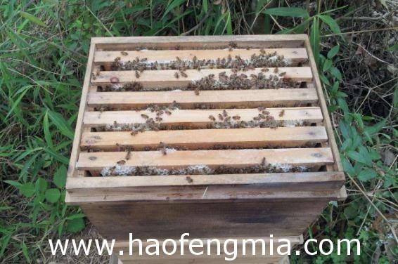 中蜂粱框顶面的上蜂路探秘