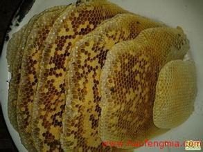 男子患重病每天被蜜蜂蜇治疗 开网店卖蜂蜜