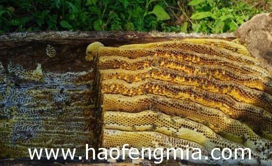 留坝蜂蜜:小蜜蜂酿出千万级甜蜜产业