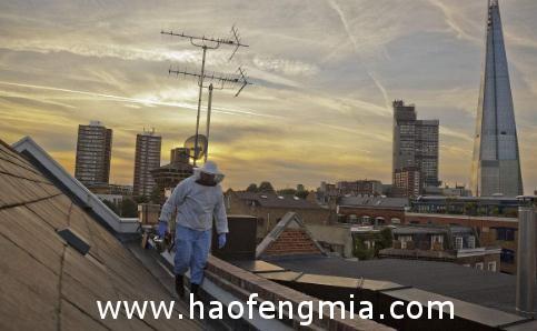 日本银座在大厦屋顶养蜂