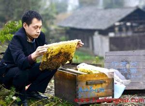 贫困户蜂蜜创业:加入养蜂队伍  脱贫致富